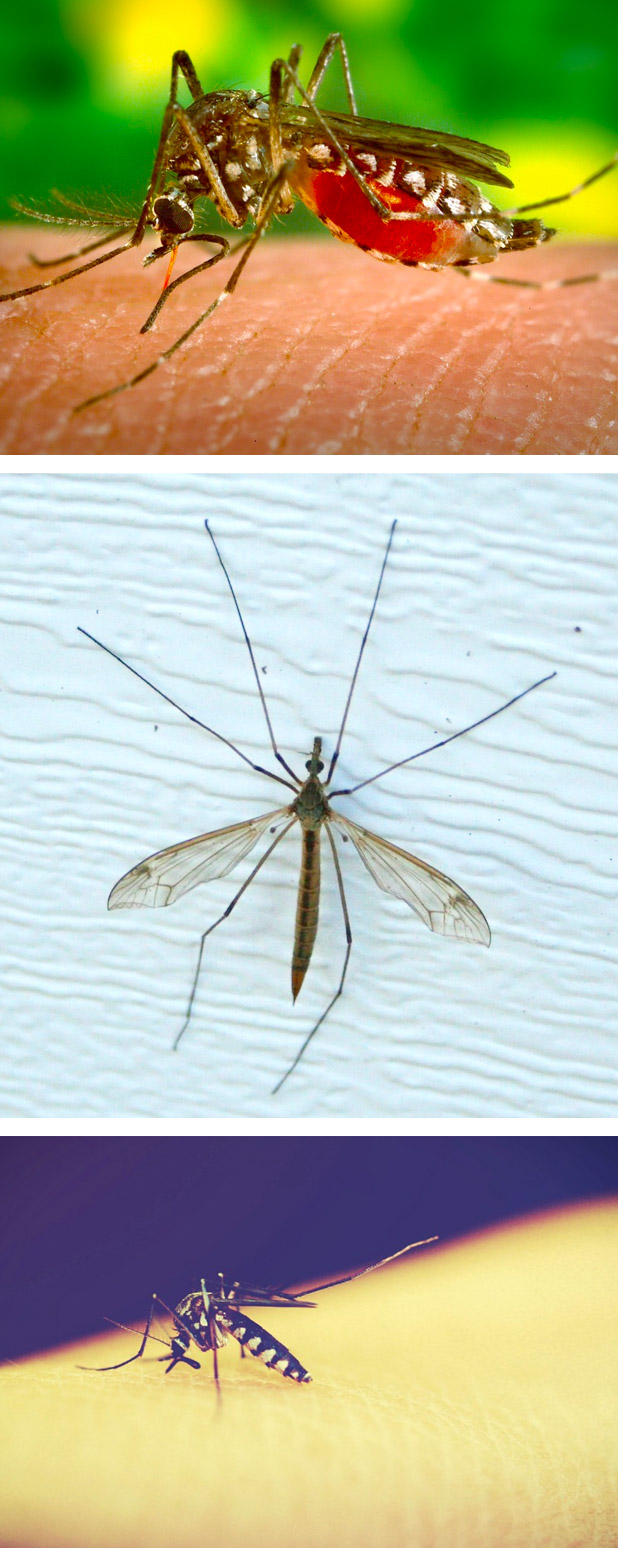 Mosquito Control Sydney